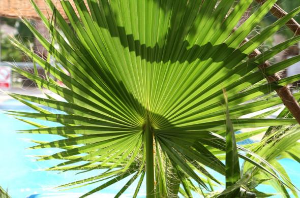 Yucca Palme Wohnzimmer : Zimmerpflanzen Yucca Palme Zimmerpalmen ...
