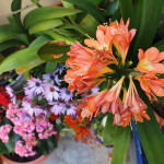 Topfpflanzen – Pflegetipps